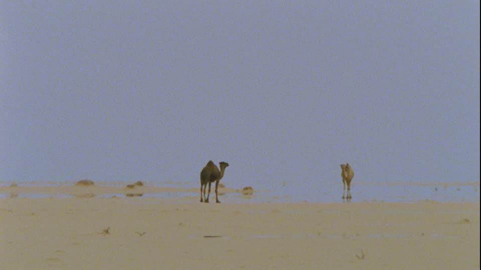 360700154-mirage-fata-morgana-libya-dromedary-heat-haze