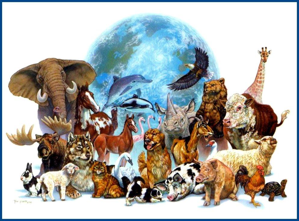 ANIMALS+OF+EARTH--GLOOM-14x10